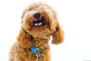 Pet photography at home